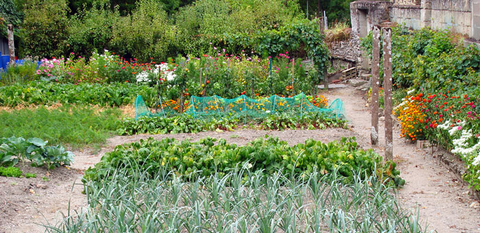 Beautiful Allotment