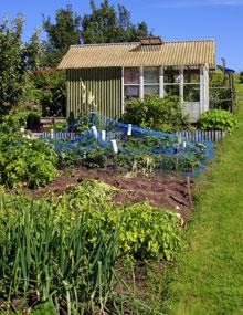 An allotment garden