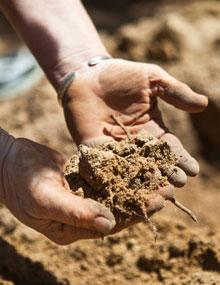 Examine your soil