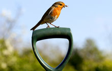 Robin sitting on a fork handle