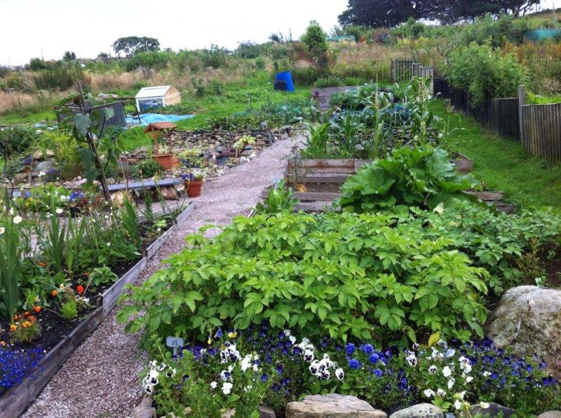 Farm Terrace Allotments Campaign Appeal