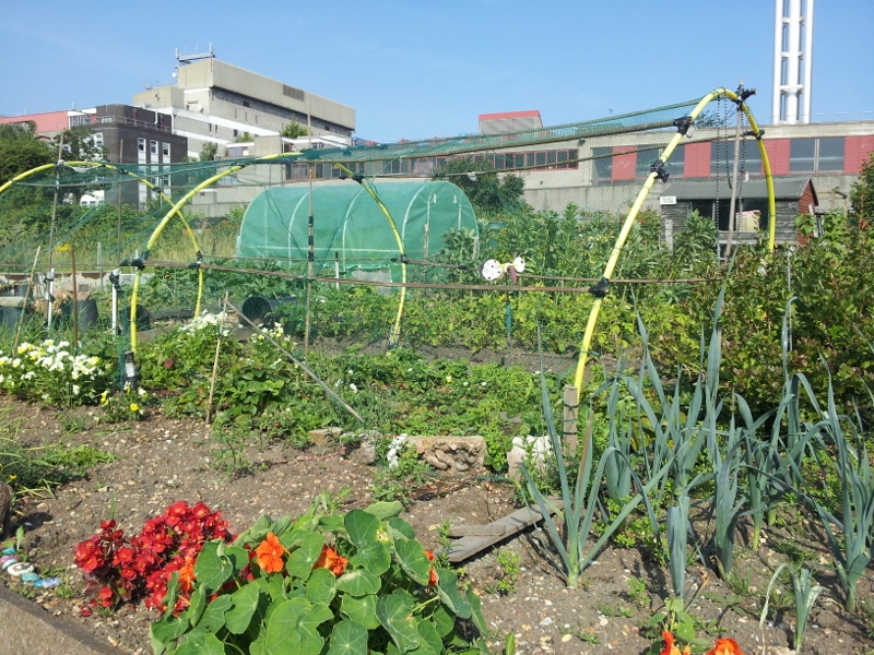 Support Farm Terrace Allotments
